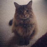 Rosie the cat - one of my regular clients